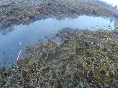 Водные растения- фотографии и описание - 08300004.JPG