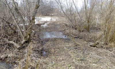 Пруд из болота - IMG_20170429_112241.jpg