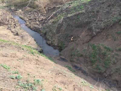 Тамбовская область, старый пруд 0.76 га. Востановление - IMG_8075.JPG