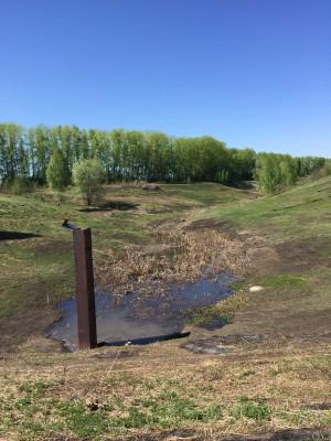 Тамбовская область, старый пруд 0.76 га. Востановление - IMG_8098.JPG