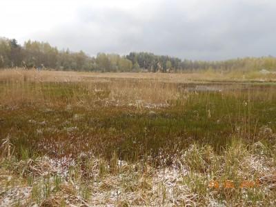 Ковер из травы на 6 га. Уровень ан 40 см ниже номинаьного, воды уже не видно. Зато видно, сколкьо травы. - DSCN1971.JPG