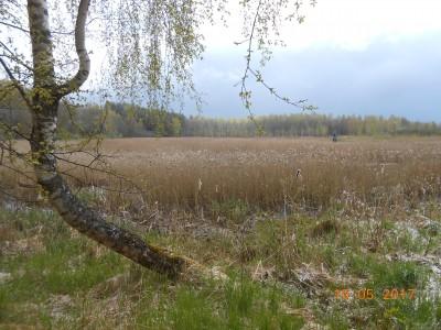 Вот таким я впервые увидел свой будущий пруд. Правда тростник был еще в два раза выше. - DSCN1989.JPG