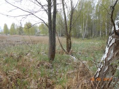 Вот таким я впервые увидел свой будущий пруд. Правда тростник был еще в два раза выше. - DSCN1991.JPG