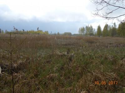 Берега 6 га. Эта трава будет вся содрана эксковтаором и сложена на берег - DSCN1992.JPG