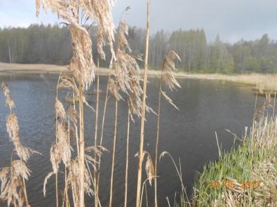 Второй берег 6 га. Разлив, который выгрызли амуры за два года. Раньше была стена тростника. - DSCN2010.JPG