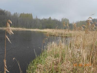 Второй берег 6 га. Разлив, который выгрызли амуры за два года. Раньше была стена тростника. - DSCN2011.JPG