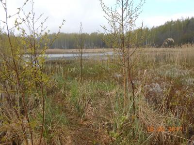 Второй берег 6 га. Разлив, который выгрызли амуры за два года. Раньше была стена тростника. - DSCN2015.JPG