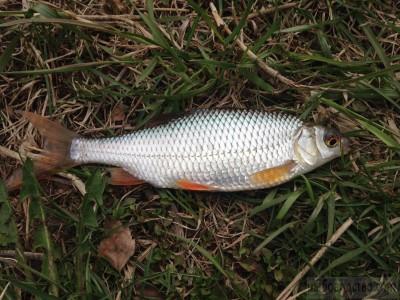 Дачный рыбовод. - IMG_2389.JPG