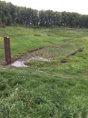 Тамбовская область, старый пруд 0.76 га. Востановление - IMG_8525.JPG