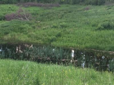 Тамбовская область, старый пруд 0.76 га. Востановление - IMG_8721.JPG