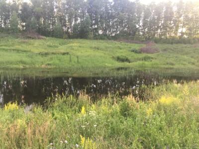Тамбовская область, старый пруд 0.76 га. Востановление - IMG_8725.JPG