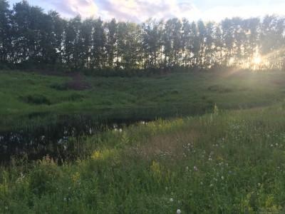 Тамбовская область, старый пруд 0.76 га. Востановление - IMG_8727.JPG