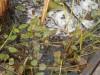 Кормление прудовой рыбы, устройства, корма, теория - DSCN2452.JPG