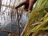 СЛИВАЕМ ВОДОЁМ отлов и перевозка рыбы в другой водоём  - первые сутки.jpg