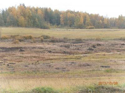 пруд 3 га - превращение из поля в водоем Или как бобры помогли в этом - PA080029.JPG