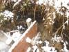 Подготовка к спуску и спуск пруда 3 га с сеголеткой карпа плюс фото-видео отчет  - DSCN2603.JPG