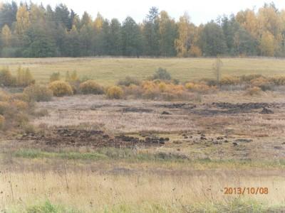 пруд 3 га - превращение из поля в водоем Или как бобры помогли в этом - PA080028.JPG