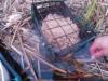 Кормление прудовой рыбы, устройства, корма, теория - post-2-1474180240.jpg