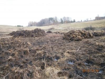 пруд 3 га - превращение из поля в водоем Или как бобры помогли в этом - PA300059.JPG