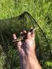 Выращивание осетровых в дачном пруду. - 1CE9953D-181E-4A33-A097-5B1F4833FCC1.jpeg