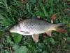 Дачный рыбовод. - IMG_3363.JPG