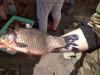 Наши рыбалки и трофеи - IMG_20200506_130653_1.jpg