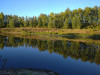 Тамбовская область, старый пруд 0.76 га. Востановление - 90E5F00E-6477-414A-892E-99A3E60C1DC0.jpeg