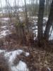 Руины прудов в 72 га зеркала - Рыбхоз и его восстановление - IMG_20210325_094918_810.jpg