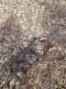 Тамбовская область, старый пруд 0.76 га. Востановление - D798AF70-BF11-4666-A33D-93166F171888.jpeg